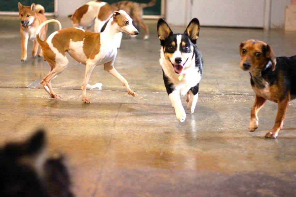 Photo Courtesy Roverchase| www.roverchase.com