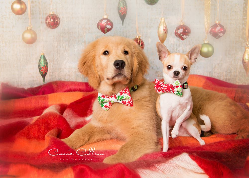 Cute Christmas Puppies.Christmas Puppies The Good The Bad And The Oh So Cute