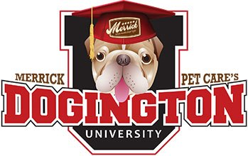 Victoria Stilwell Webinar on Dogington Post