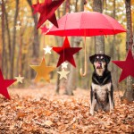 How To Clicker Train Your Dog To Stay