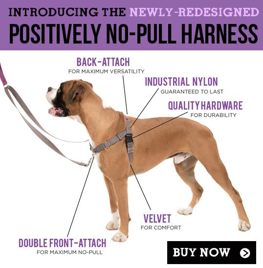 Non Pull Dog Collar