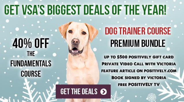 Get VSA's biggest deals of the year!