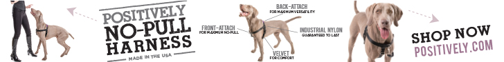 Victoria's No-Pull Harness