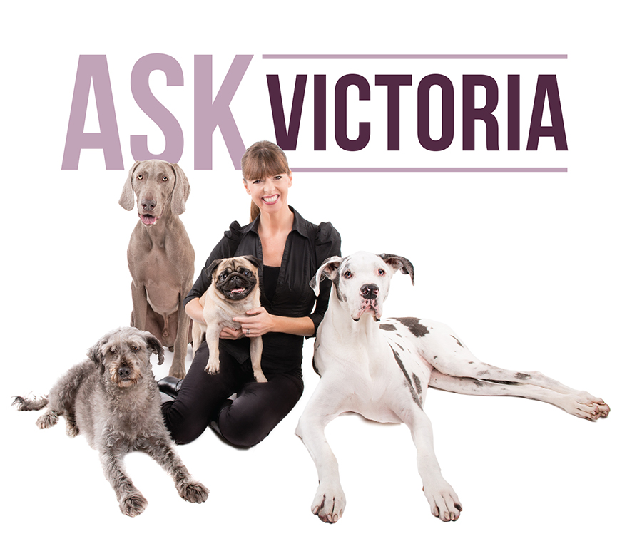 ask_vik