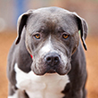 BREED_SPECIFIC_ISSUES_110