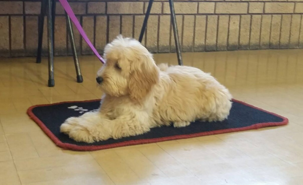 "15-week-old Bailey rests quietly on her mat at Puppy Class - an illustration from ""Calm Down!"""