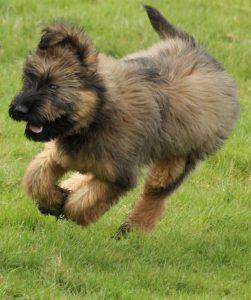 Friendly dog rushing in