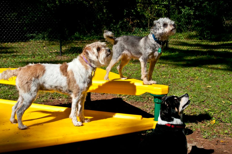 Clawson dog focus