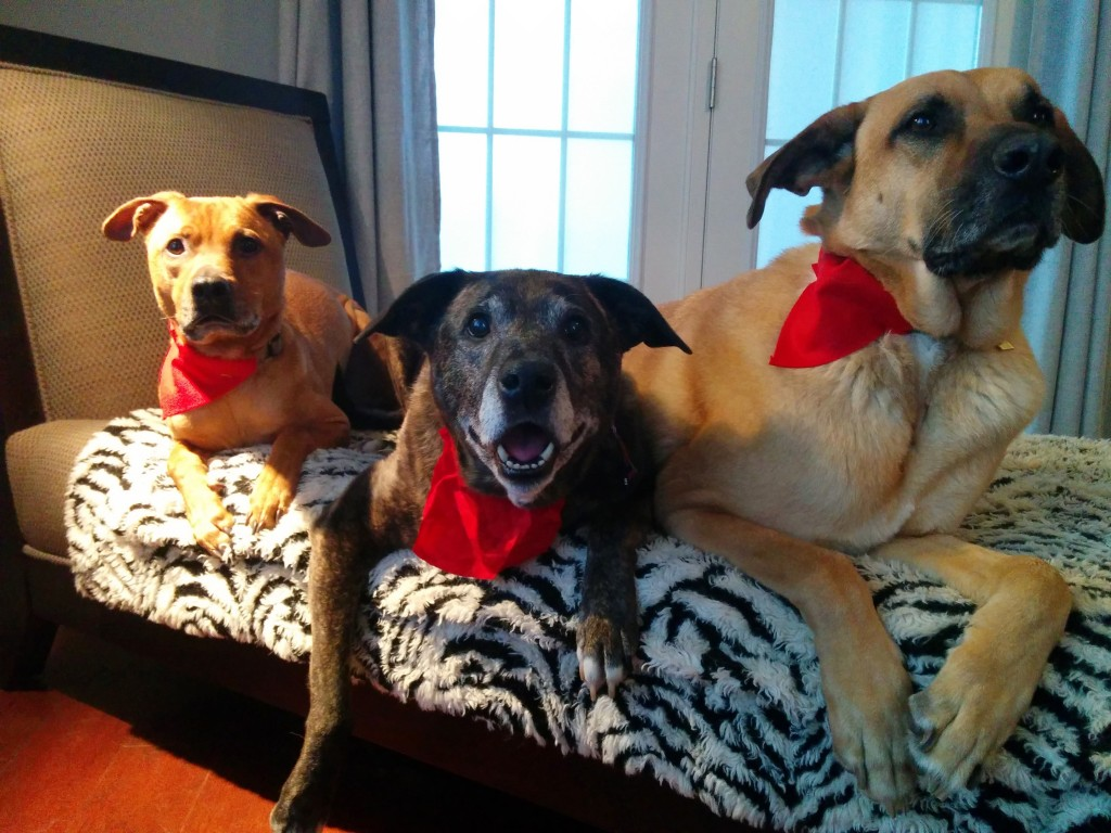 Cooper, Emmett, Lucas rock their DIY collar scarf