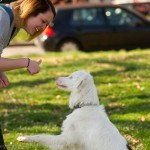Training-Deaf-Dog