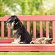 DOGS_AND_CATS_110