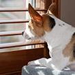 Dog Boredom vs. Separation Anxiety