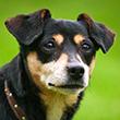 DOG_HEARING_110x110