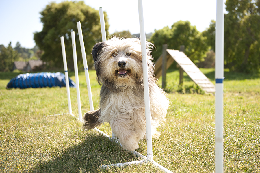 DOG_SPORTS_Featured