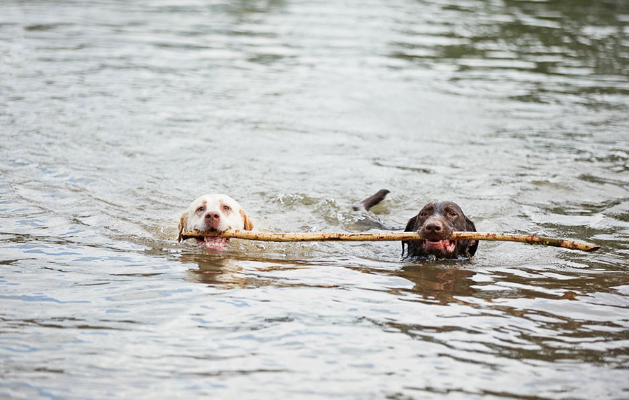 DOG_SWIMMING_Featured