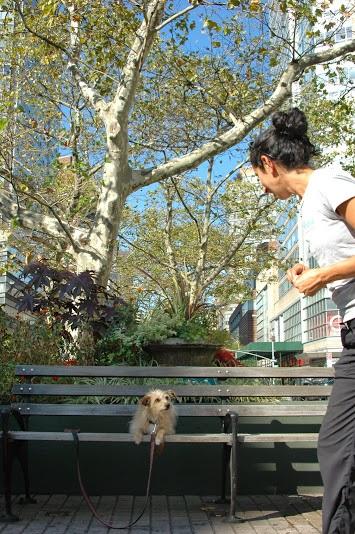 DSC_9036_Tricky park bench