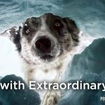 Dogs With Extraordinary Jobs