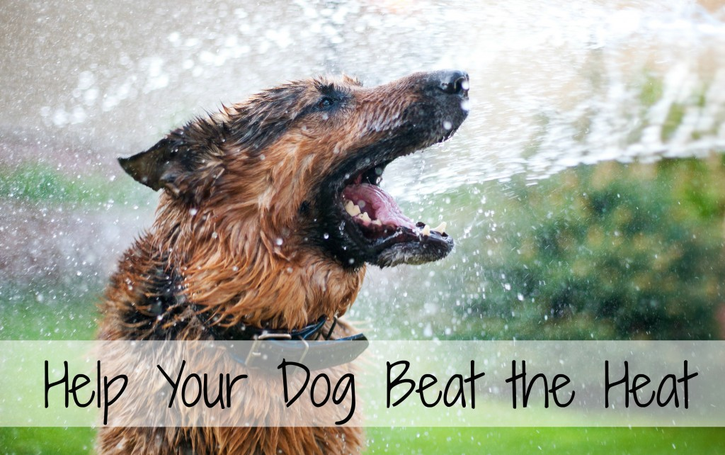Help Your Dog Beat the Heat