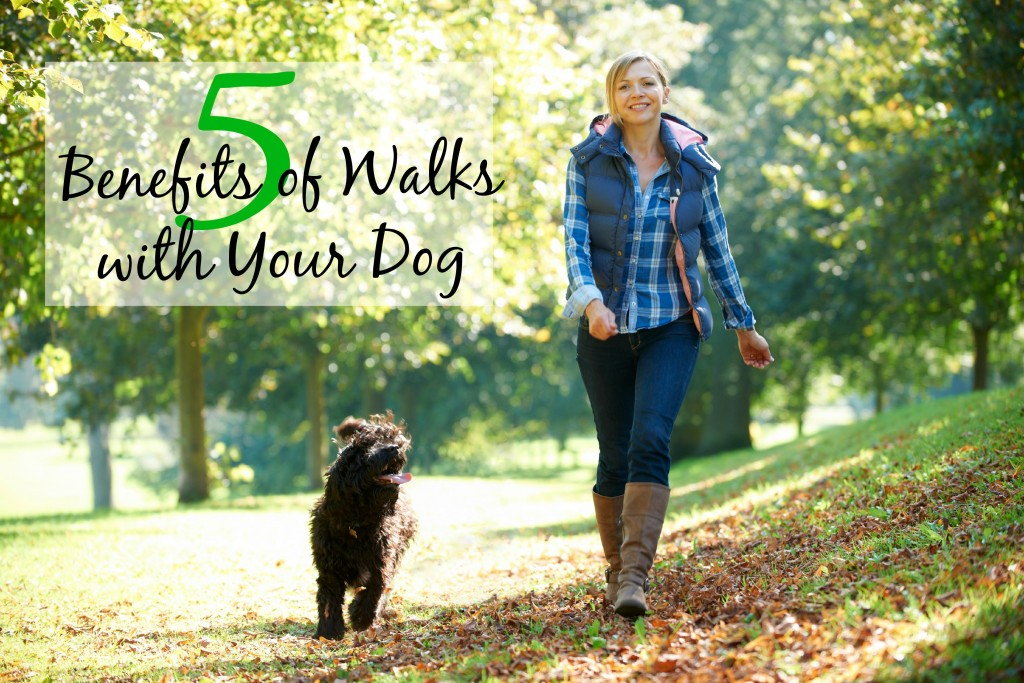 Walking with your dog has so many health benefits. For National Walk Your Dog Week, here's 5 reasons to hit the pavement with your four-legged pal.