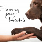 Finding Your Match - Victoria Stilwell's Positively