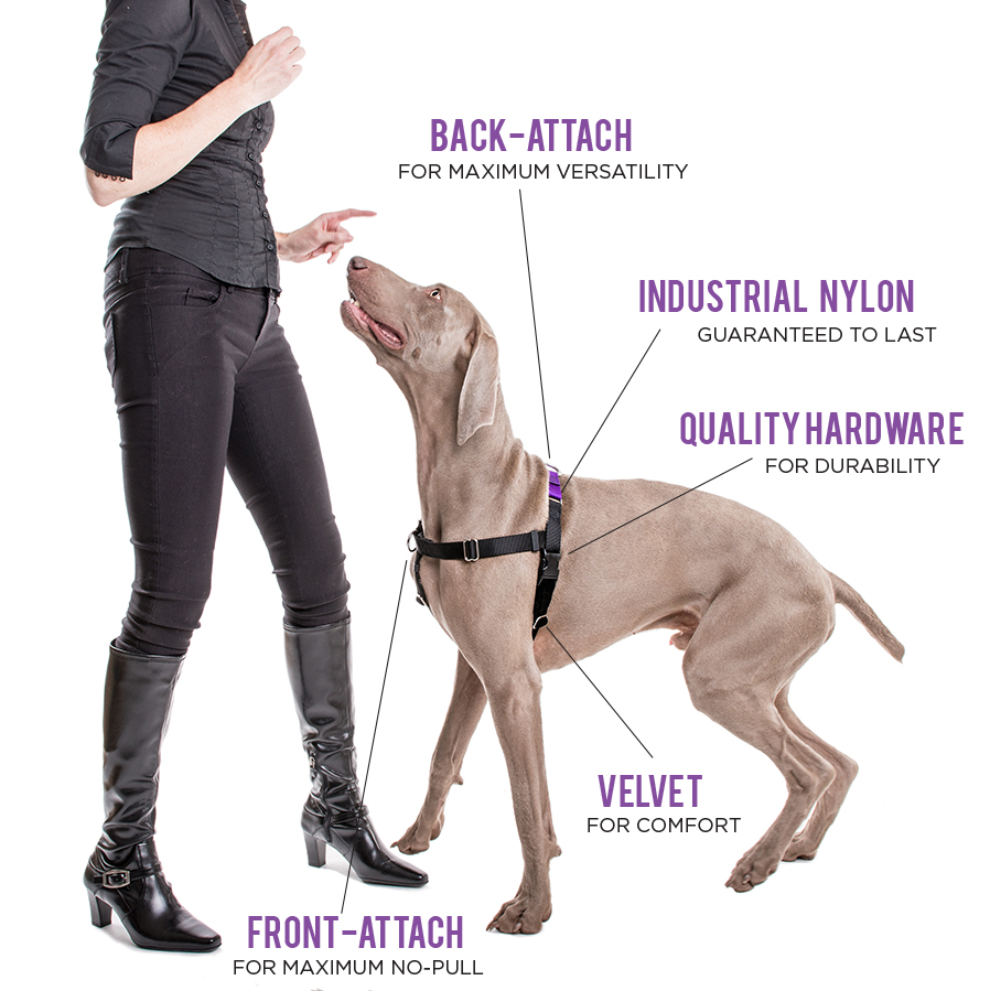 Victoria's versatile Positively No-Pull Harness helps solve leash walking issues and serves as a standard harness.