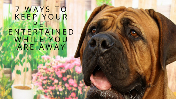 How Long Should You Leave Your Dog at Home?