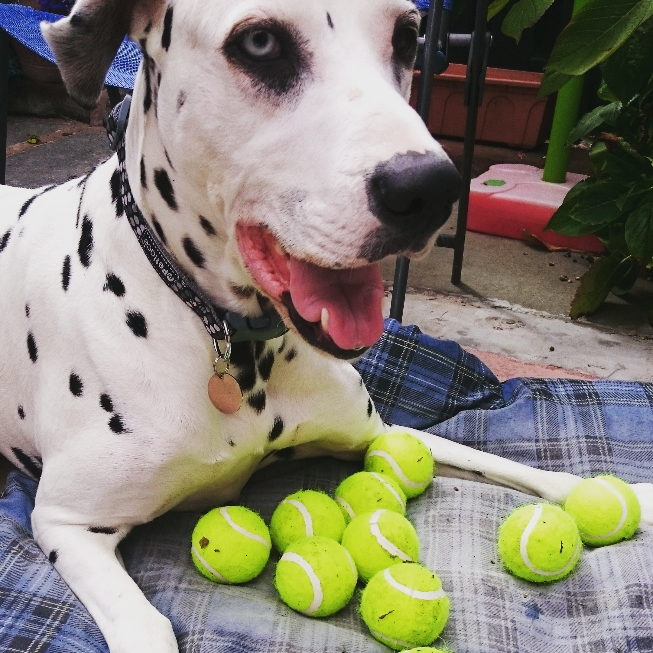 Which Ball to choose!