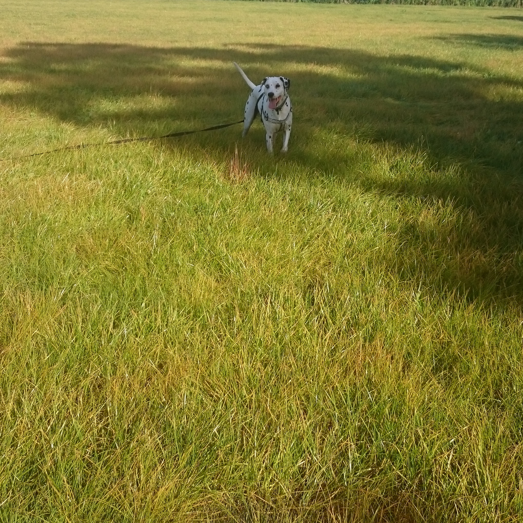Logan walking in the field!