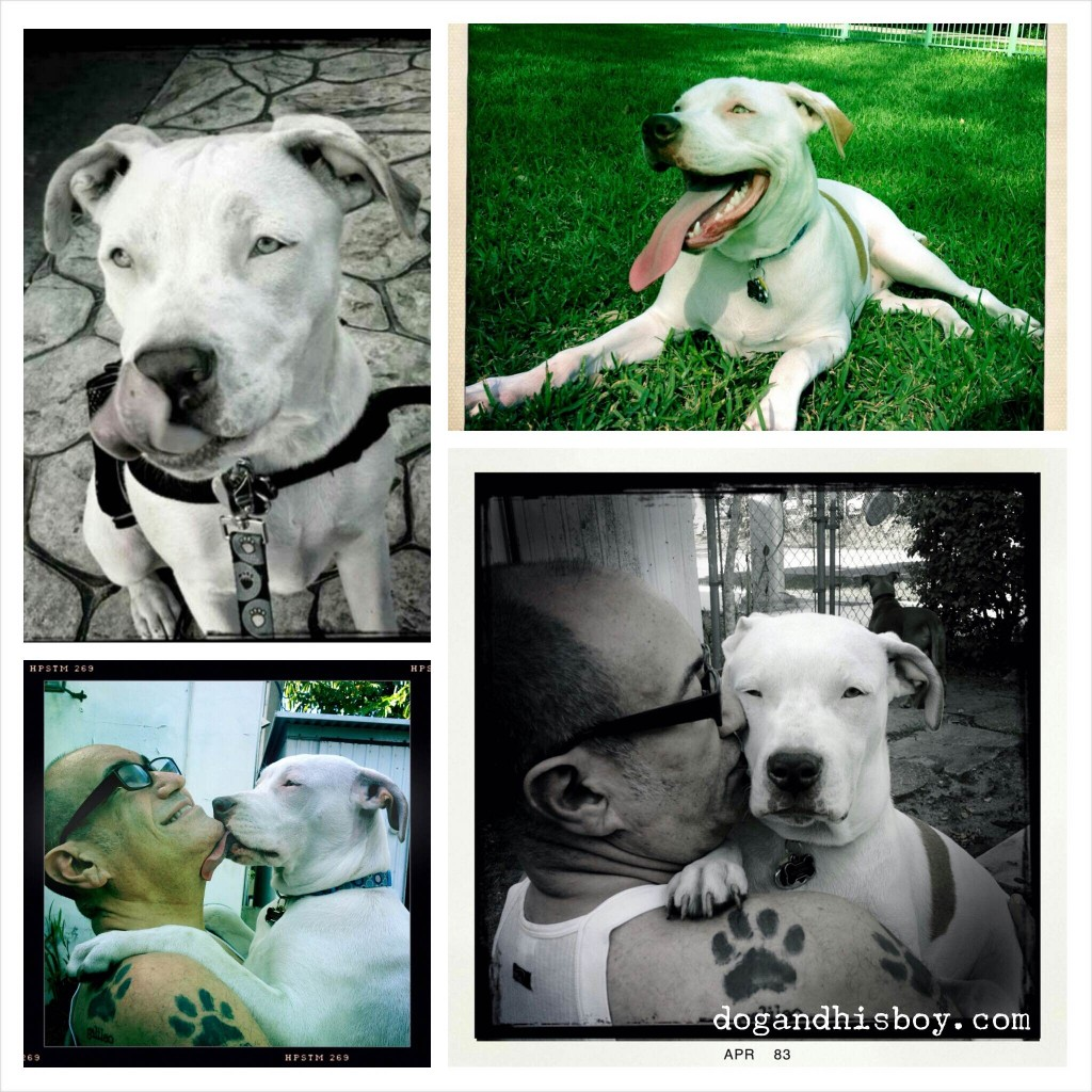 Living with and Training a Deaf Dog