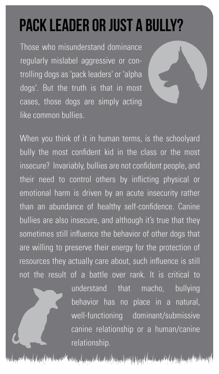 Pack Leader or Just a Bully? Those who misunderstand dominance regularly mislabel aggressive or controlling dogs as 'pack leaders' or 'alpha dogs'. But the truth is that in most cases, those dogs are simply acting like common bullies.  When you think of it in human terms, is the schoolyard bully the most confident kid in the class or the most insecure? Invariably, bullies are not confident people, and their need to control others by inflicting physical or emotional harm is driven by an acute insecurity rather than an abundance of healthy self-confidence. Canine bullies are also insecure, and although it's true that they sometimes still influence the behavior of other dogs that are willing to preserve their energy for the protection of resources they actually care about, such influence is still not the result of a battle over rank. It is critical to understand that macho, bullying behavior has no place in a natural, well-functioning dominant/submissive canine relationship or a human/canine relationship.