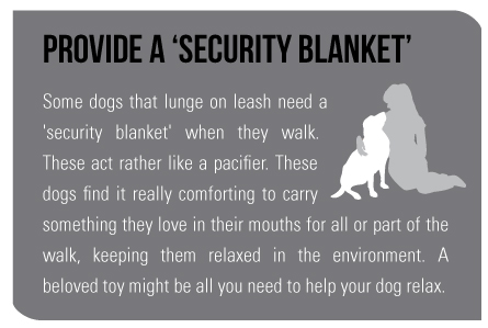 Provide a 'Security Blanket' Some dogs that lunge on leash need a 'security blanket' when they walk. These act rather like a pacifier. These dogs find it really comforting to carry something they love in their mouths for all or part of the walk, keeping them relaxed in the environment. A beloved toy might be all you need to help your dog relax.
