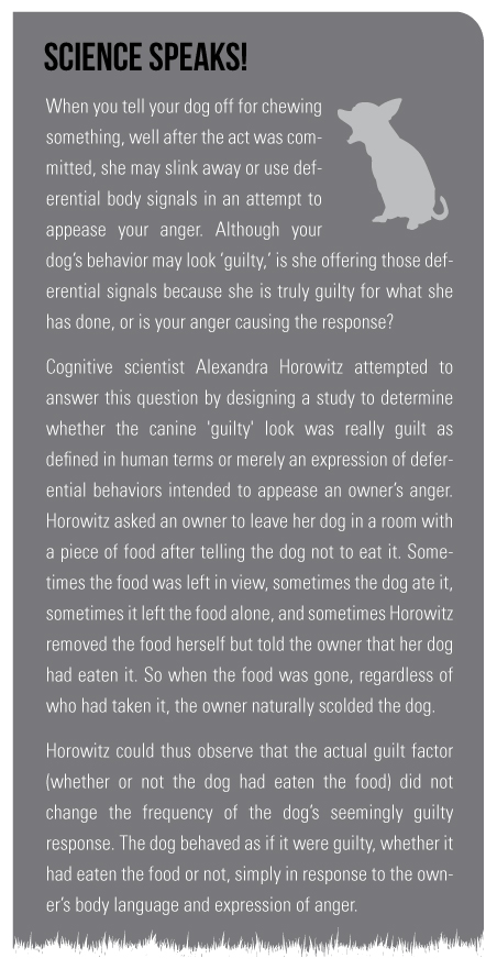 "Science Speaks!  When you tell your dog off for chewing something, well after the act was committed, she may slink away or use deferential body signals in an attempt to appease your anger. Although your dog's behavior may look ""guilty,"" is she offering those deferential signals because she is truly guilty for what she has done, or is your anger causing the response? Cognitive scientist Alexandra Horowitz, attempted to answer this question by designing a study to determine whether the canine 'guilty' look was really guilt as defined in human terms or merely an expression of deferential behaviors intended to appease an owner's anger. Horowitz asked an owner to leave her dog in a room with a piece of food after telling the dog not to eat it. Sometimes the food was left in view, sometimes the dog ate it, sometimes it left the food alone, and sometimes Horowitz removed the food herself but told the owner that her dog had eaten it. So when the food was gone, regardless of who had taken it, the owner naturally scolded the dog. Horowitz could thus observe that the actual guilt factor (whether or not the dog had eaten the food) did not change the frequency of the dog's seemingly guilty response. The dog behaved as if it were guilty, whether it had eaten the food or not, simply in response to the owner's body language and expression of anger."