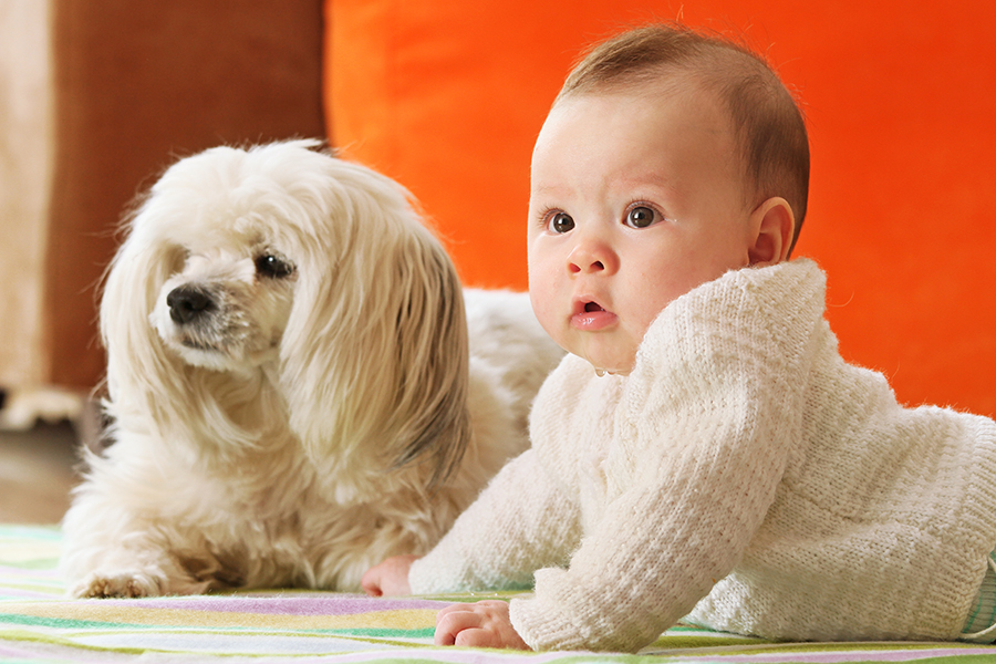 INTRODUCING_DOG_AND_BABY_Featured