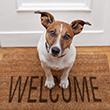 INTRODUCING_NEW_DOG_110