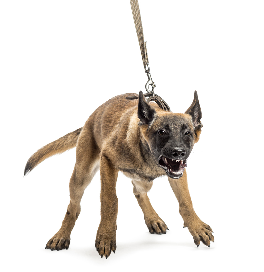 LEASH_AGGRESSION_Featured