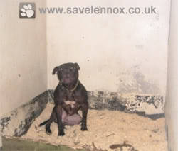 Lennox was confiscated by the Belfast authorities because of how he looked.