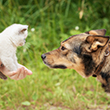 NEW_CAT_TO_DOG_110