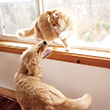 NEW_DOG_TO_CAT_110