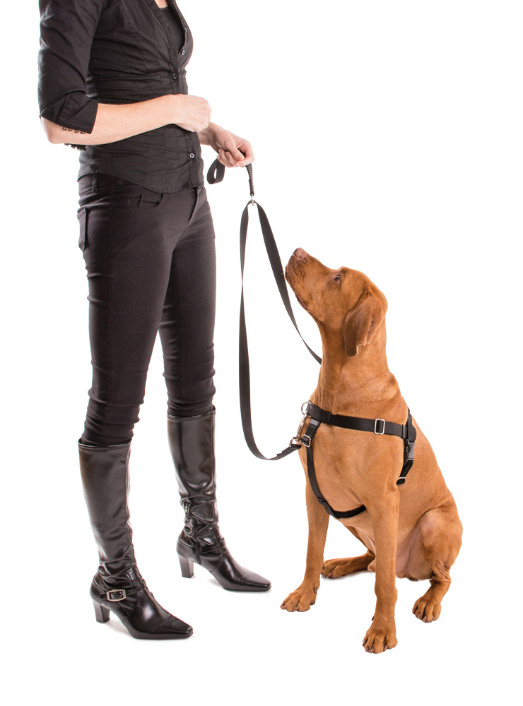 Victoria Stilwell's new No-Pull Harness & Double Connection Leash.
