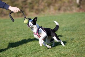 Off-Leash Reliability? Recall? Leash Off Game On! | Victoria