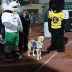 football game half time show celebrate service dogs she pee\`d but tv cameras only saw her squating!