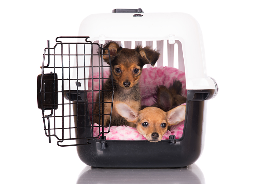 PUPPY_CRATE_Featured