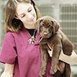 PUPPY_VACCINATIONS_110