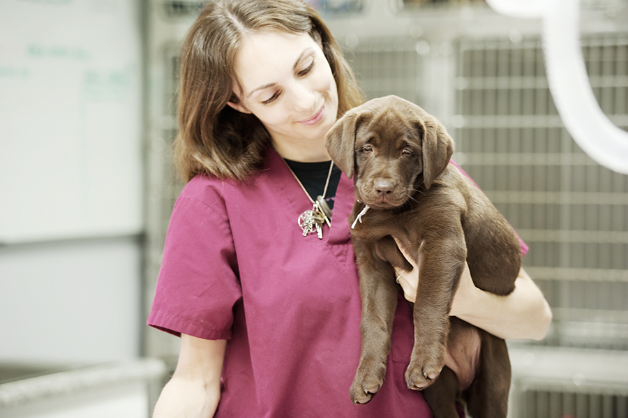 PUPPY_VACCINATIONS_Featured