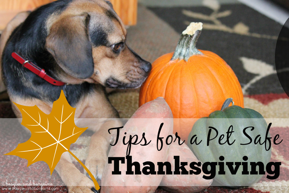 Pet Safe Thanksgiving Tips