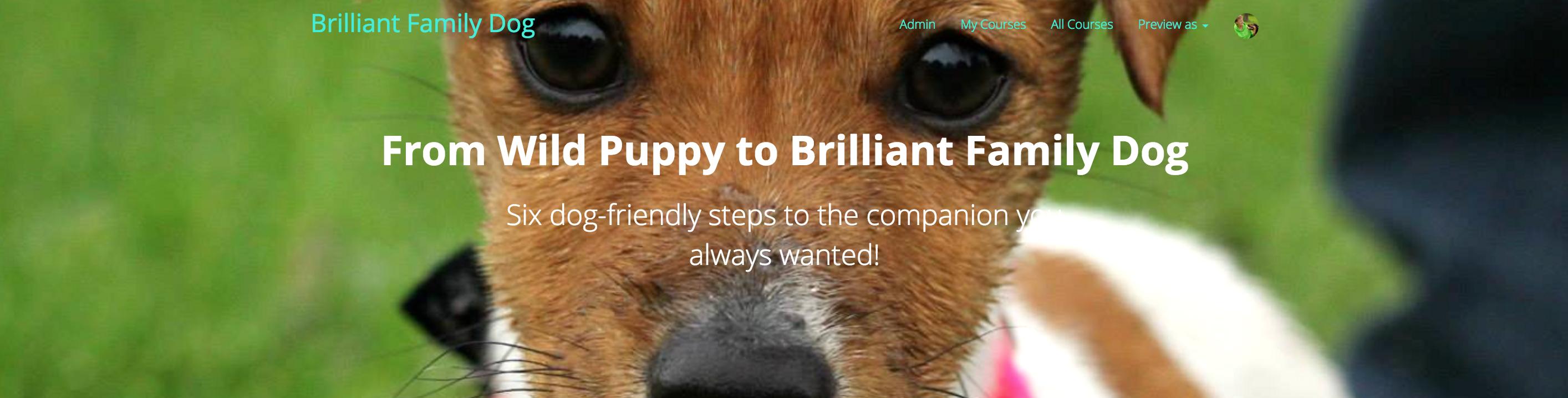 New puppy, puppy class, puppy training | Online course: From Wild Puppy to Brilliant Family Dog | www.brilliantfamilydog.com