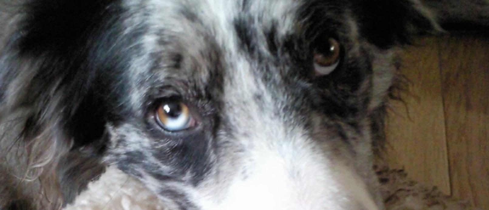 Reactive, fearful dog
