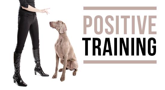 dog training victoria stilwell positively
