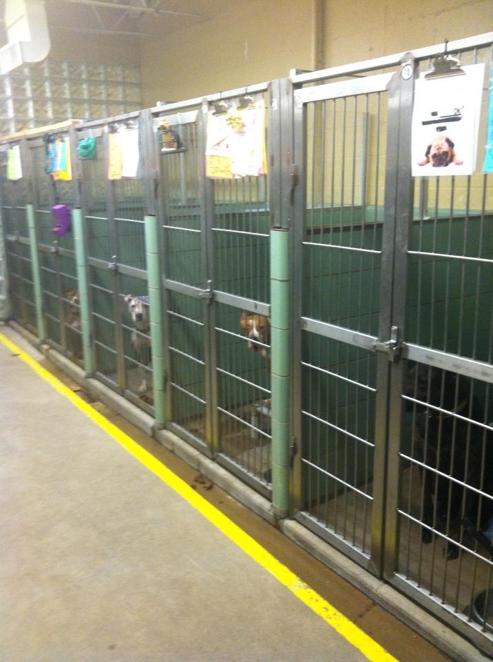 Shelterdogspicforblogfrommary