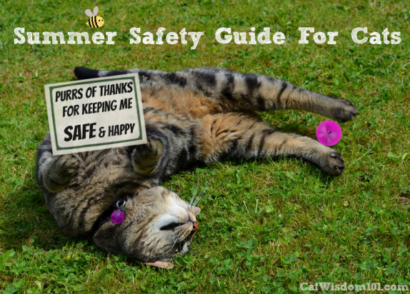 Summer-safety-guide-for-cats
